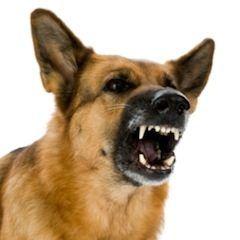 perro-peligroso.jpg